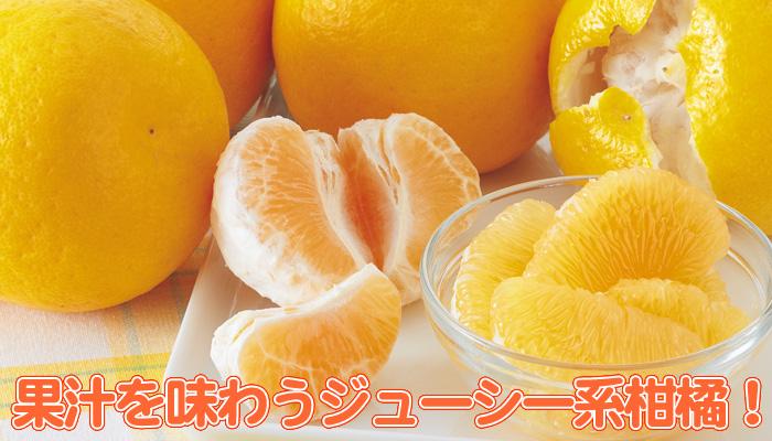 柑橘 ばん かん